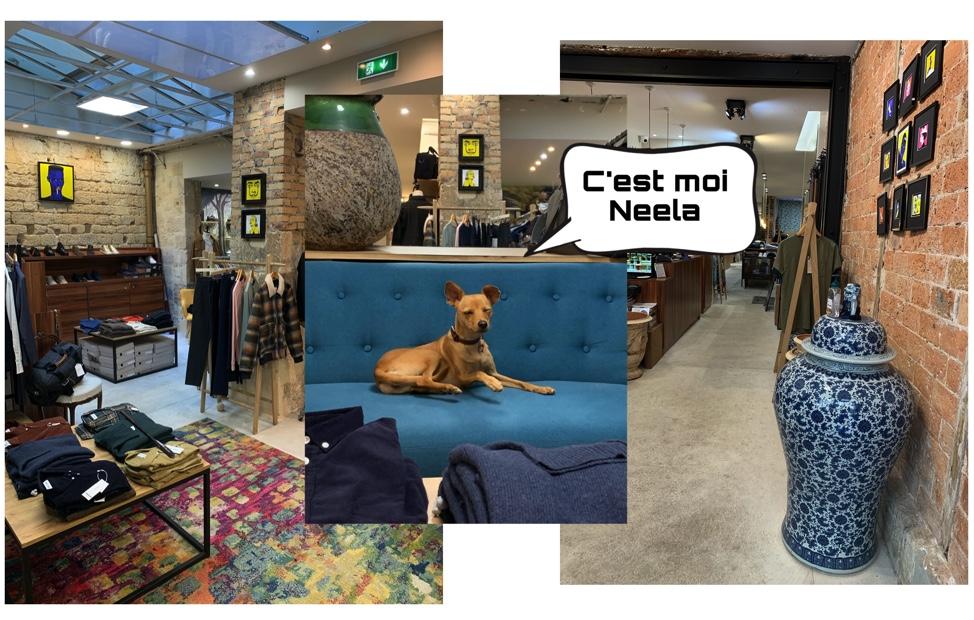 Photo de Neela, la mascotte de la boutique sur un canapé bleu. L'intérieur tendance de la boutique avec ses grands espaces mettent en valeur les articles choisis par Alexandre